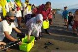 Pasangan SALAM melepasliarkan puluhan ekor tukik di pantai Mataram