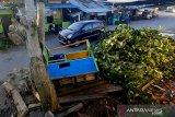 Angin kencang menumbangkan pepohonan di Tanjung Selor
