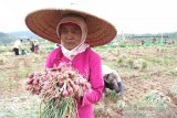 Bantul berencana aktifkan KUD bantu persoalan petani