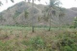 Persoalan tanah Tomang-Omang Desa Selong Belanak Loteng kembali mencuat