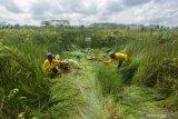 Sejumlah desa di Pulpis miliki keanekaragaman hayati ekosistem gambut
