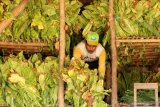 Ketum APTI sebut kenaikan tarif cukai semakin beratkan petani tembakau