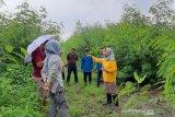 Pemprov NTB memastikan lima desa siap menerima bantuan sapi impor