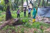 Penemuan mayat di Siak, diduga sopir travel dari Pekanbaru yang hilang seminggu
