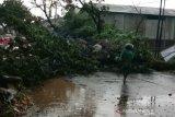 Puluhan pohon di Kudus tumbang diterjang angin kencang