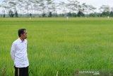 Rencana perluasan 'food estate' hingga ke Papua, NTT, Sumsel