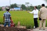 Presiden Jokowi minta model bisnis 'food estate' Kalteng-Sumut segera disusun