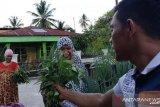 Tagana Kota Solok berbagi hasil panen, sayuran hidroponik