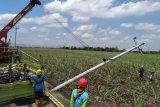 Pascahujan disertai angin kencang, 1.012 gardu trafo PLN di Kudus alami gangguan