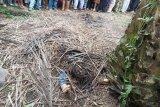 Rani Angreni ditemukan sudah jadi mayat, diduga korban begal