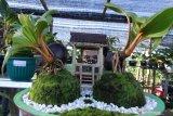 Pengunjung melihat bonsai kelapa (bonkla) yang  dipamerkan pada acara Expo Seribu Bunga di Agro Wisata Tamansuruh, Banyuwangi, Jawa Timur, Rabu (23/9/2020). Meningkatnya peminat tanaman hias dimasa pandemi COVID-19, Perkumpulan Pecinta Petani Hortikultura (Petara), menggelar pameran untuk mewadahi pecinta dan petani hortikultura guna meningkatkan nilai ekonomi. Antara Jatim/Budi Candra Setya/zk