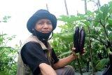 Waktunya petani harus punya inovasi agar tak merugi