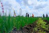 Pekanbaru alokasi Rp2 miliar percepat pemulihan ekonomi pangan