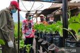 Tjhai Chui Mie ajak kaum ibu manfaatkan perkarangan rumah