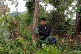 Kambing warga ditemukan mati penuh luka, BKSDA Agam pasang kamera pemantau satwa