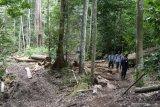 Walhi Sumsel prihatin kerusakan hutan  terus berlangsung