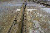 Petambak memanen garam di Losarang, Indramayu, Jawa Barat, Sabtu (26/9/2020). Petambak di daerah tersebut mengeluhkan produksi garam tahun ini menurun akibat musim kemarau basah. ANTARA JABAR/Dedhez Anggara/agr