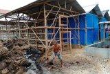 Petani Mesuji pilih budi daya jamur merang di tengah pandemi