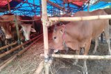 CIPS: UU Cipta Kerja tingkatkan investasi di  sektor peternakan