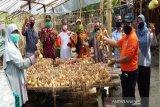 Kulon Progo uji coba penanaman bawang bombay di Nanggulan