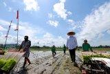 Sektor pertanian di Banyuwangi tumbuh positif di tengah pandemi COVID-19