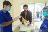 Pemkot Palembang siapkan  ribuan vaksin rabies gratis