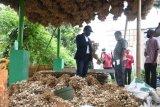 Budi daya bawang putih asal Batang tembus pasar Taiwan
