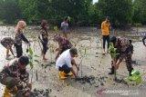 BPDASHL laksanakan padat karya penanaman mangrove 11 kabupaten di Sultra