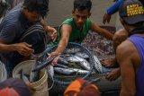 Masa pandemi, investasi Asia Timur sektor perikanan turun