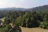 Hutan sumber ketahanan dan penyediaan pangan, kata pakar