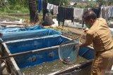 Produksi ikan air tawar di  Agam mencapai 9.500,83 hingga Juni 2020