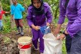 PKM Peternakan Unand Perkuat Pengelolaan Ternak Kerbau di Nagari Pauh Sangik Lima Puluh Kota