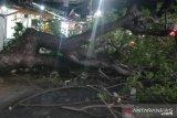 Pohon tumbang di Kebun Pala Jakarta Timur timpa warga dan merusak motor
