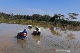 Dinas Pertanian Cilacap minta petani lakukan percepatan tanam