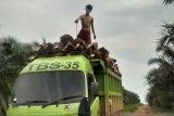 Harga TBS sawit di Kalbar dekati Rp2.000 per kilogram