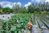PT Freeport-Unipa kerja sama teliti pemanfaatan lahan tailing