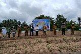 Pemkab Morowali Utara dukung upsus tanam bawang merah-cabai