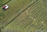 Presiden Jokowi: Pertumbuhan sektor pertanian harus dijaga di tengah pandemi