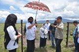 Gubernur Sulteng tinjau lokasi penggembalaan sapi di Poso