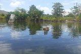 Peneliti Arkeologi : Tinggalan megalitik terlihat di dalam Danau Sentani Jayapura