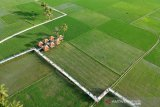Wisata sawah di Desa Huntu Selatan Provinsi Gorontalo ramai dikunjungi wisatawan