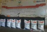 Bulog Sulteng  siapkan stok beras 6.982 ton bansos PKH