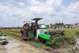 Mentan : Sektor pertanian menjadi penopang pendapatan negara