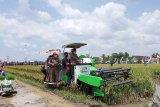 Menteri Pertanian : Sektor pertanian menjadi penopang pendapatan negara