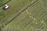 Presiden Joko Widodo: Pertumbuhan sektor pertanian harus dijaga di tengah pandemi
