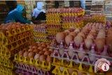 Lampung siap ekspor telur ayam