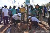Pemkot Kupang diminta bangun hutan kota
