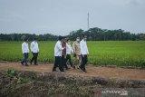 Presiden sebut model bisnis 'food estate' Kalteng bisa dicontoh tempat lain