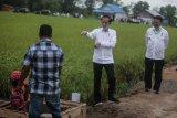 Jokowi inginkan ada budi daya ikan di 'food estate' Kalteng