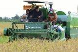 Food estate rangsang minat generasi muda bekerja di bidang pertanian